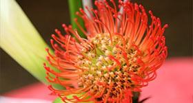 Exotic_Floral_Arrangements CBD Events Washington