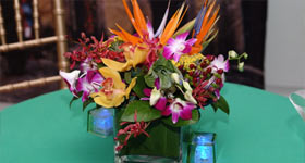 Exotic Florals CBD Events Washington